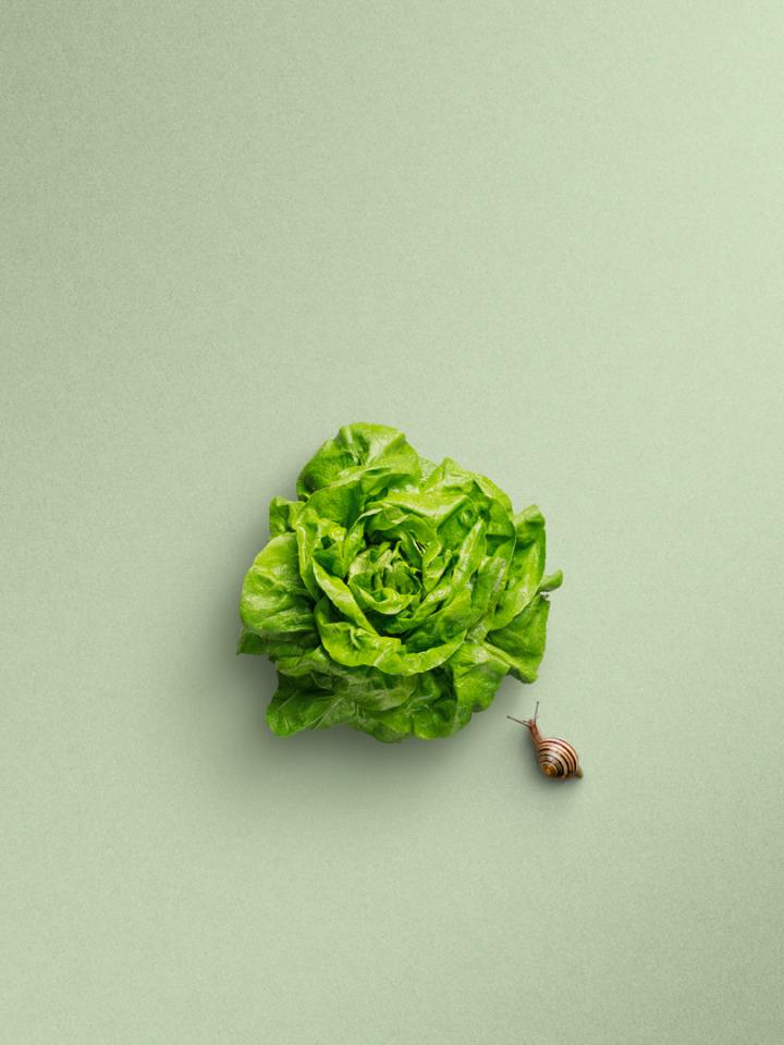 Salat mit Schnecke